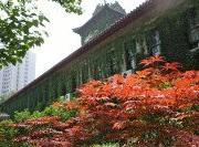 Nanjing_university